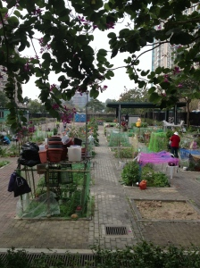 Postage stamp gardening in Hong Kong