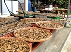 Oysters, Waiting, Tai O