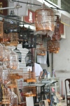 Bird Market, Prince Edward