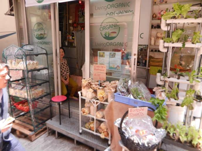 Organic, grow your own mushrooms in Hong Kong