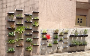 HKBU vertical garden