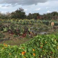 Rhubarb Farm:  Therapeutic Horticulture and the repair of talking to others.